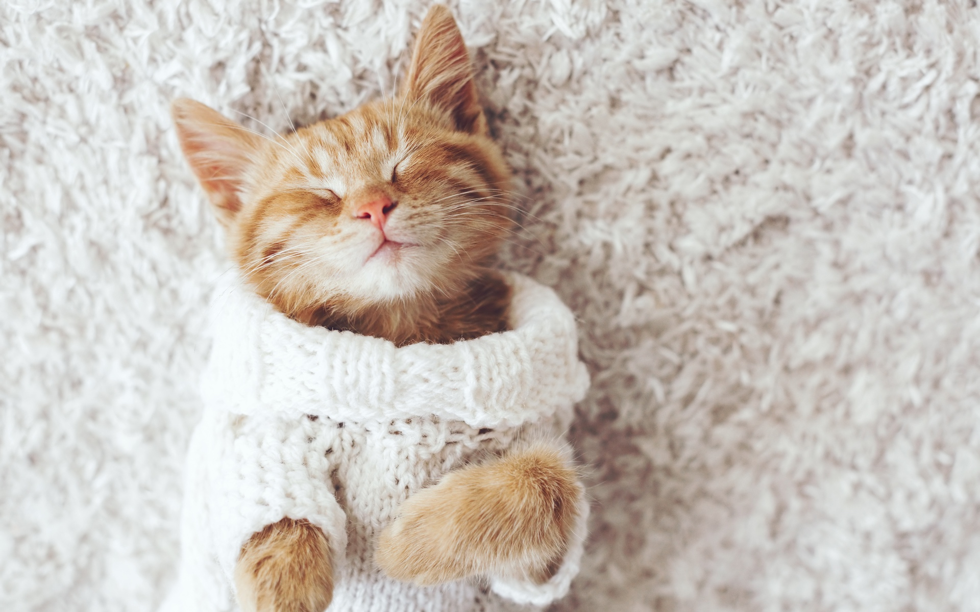 sleeping kitten wearing a knitted sweater