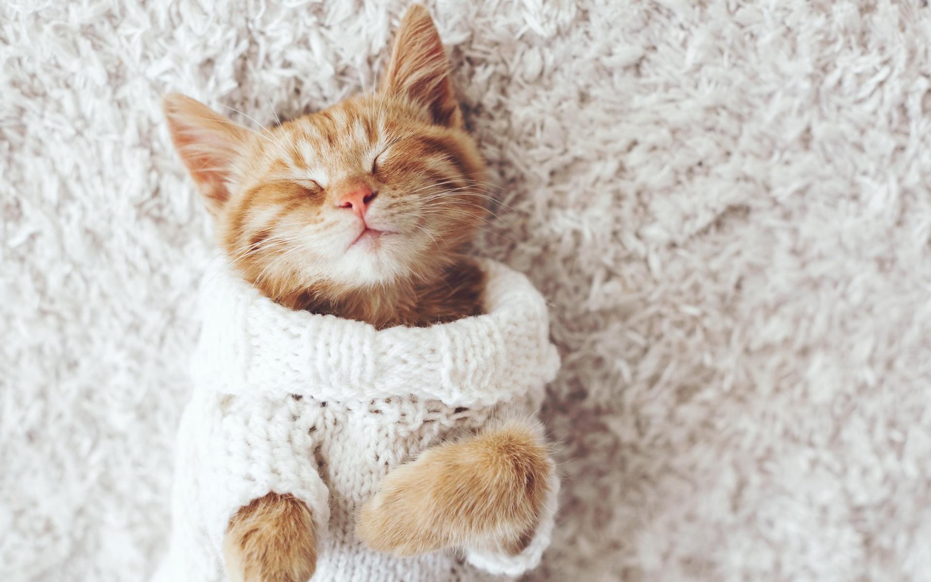 sleeping kitten wearing a knitted sweater
